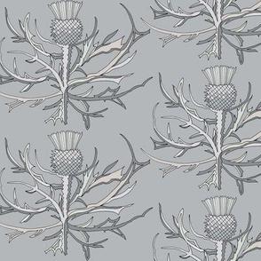 Scottish Garden Thistle, Grey