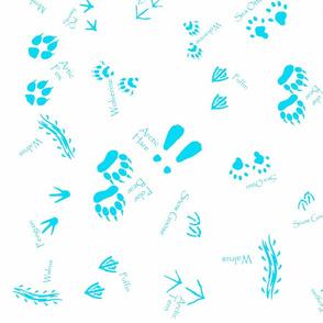 Artic animal tracks by kedoki