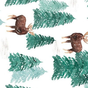 Moose and Evergreens