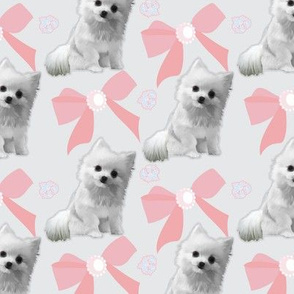 Pomeranian Clipped with Bows