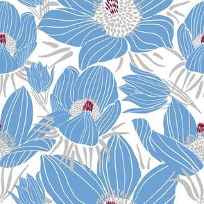 Arctic Blueish Pasque flowers (white 2)
