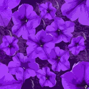 Violet Pansies