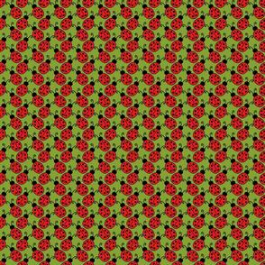 Ladybugs on Green