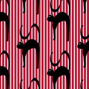 Blackie Norton the Black cat