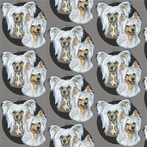 chinese crested dogs on crested background