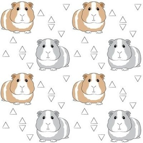 guinea-pigs-with-triangles on white