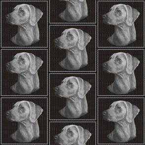 weimeraner dog