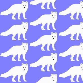 Arctic  Fox in purple
