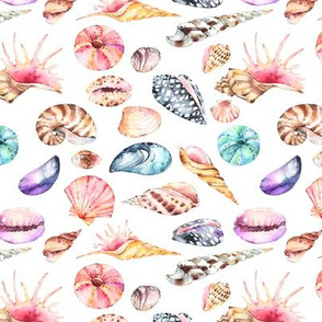 Watercolor Seashells 6""