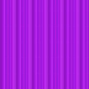 optic purple-ed-ed