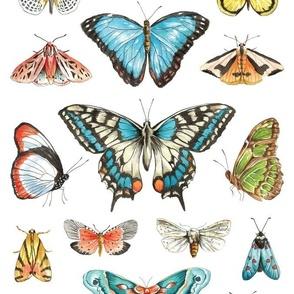 Watercolor Butterflies and Moths