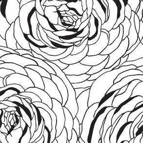 Ranunculus Black & White