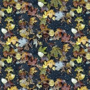 Asphalt Leaves