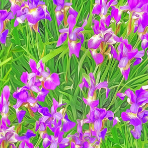 Asiatic Purple Iris Foliage