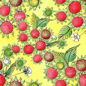 Strawberry Bottoms