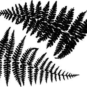 In the Shadow of Ferns