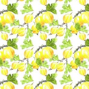 Gooseberry lemon yellow