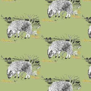dartmoor sheep  moorland greens