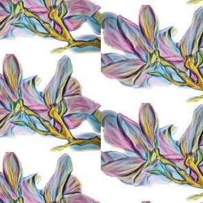 watercolour magnolia pop