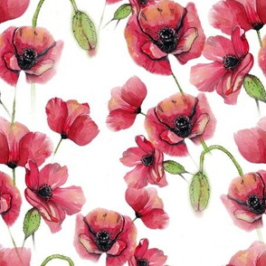 Red poppies pattern