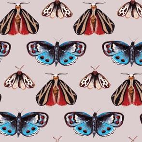 Moths + Butterflies