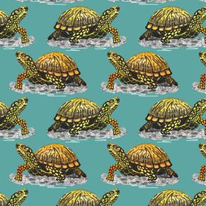 box turtle teal