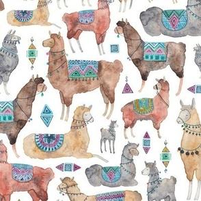 Llamas and Alpacas!