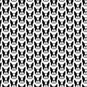 Boston Terrier fabric! Mini micro Bostons! Cute Boston Terrier faces in small repeat