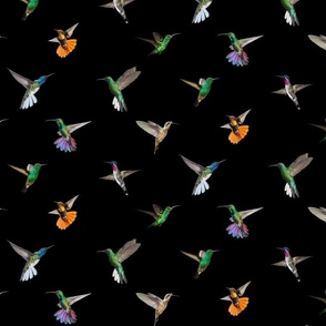 Hummingbirds of T and T Black