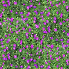 Wild Geranium Purple Repeat