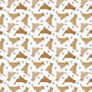 Tiny Golden Retrievers - gray