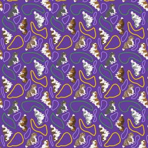 Tiny piebald Longhaired Dachshunds - Mardi Gras