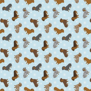 Tiny Smooth Dachshunds - winter snowflakes