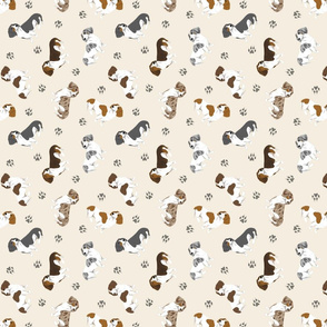 Tiny piebald Smooth Dachshunds - tan