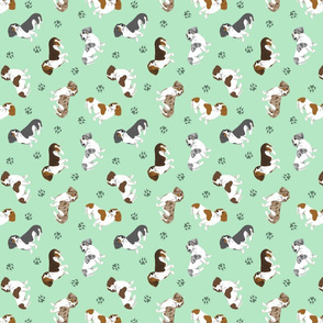 Tiny piebald Smooth Dachshunds - green