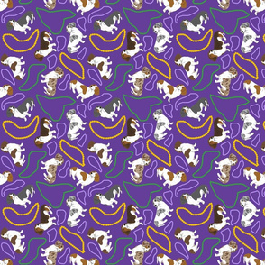 Tiny piebald Smooth Dachshunds - Mardi Gras
