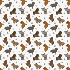 Tiny Wirehaired Dachshunds - gray