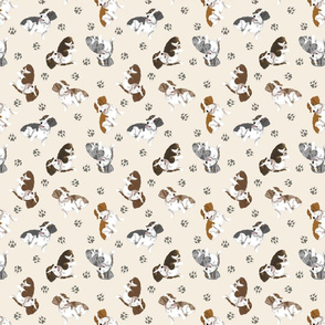 Tiny piebald Wirehaired Dachshunds - tan