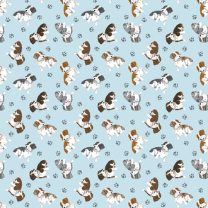 Tiny piebald Wirehaired Dachshunds - blue