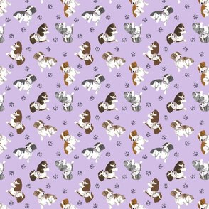 Tiny piebald Wirehaired Dachshunds - purple