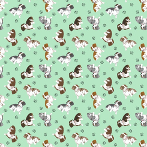 Tiny piebald Wirehaired Dachshunds - green