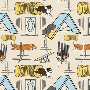 Simple Border Collie agility dogs C - tan