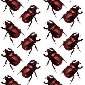 Red Beetles
