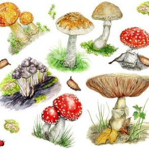 Small Mushrooms And Toadstools