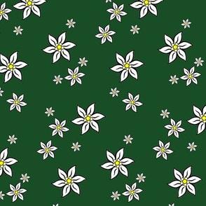 edelweiss on green