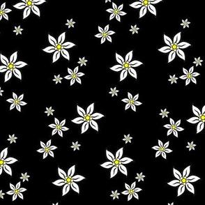 edelweiss on black