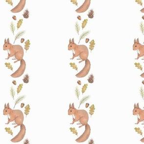Squirrel stripes 2