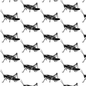 Grasshoppers by Kim Rossiter