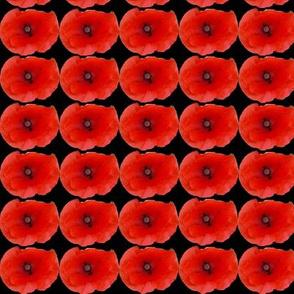 Red Poppy heads on Black