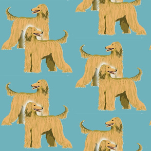 Afghan hounds Two